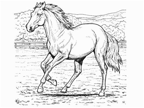 printable coloring pages of realistic horses coloring pictures printable coloring pages