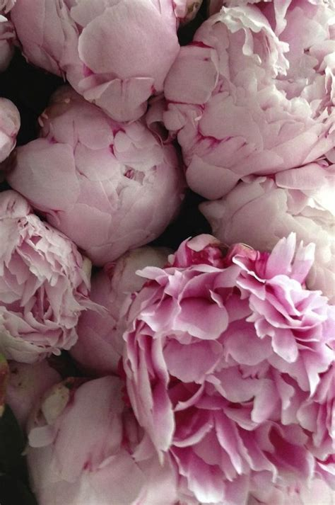 the absolute best of edith piaf 309 best images about pink on aomori