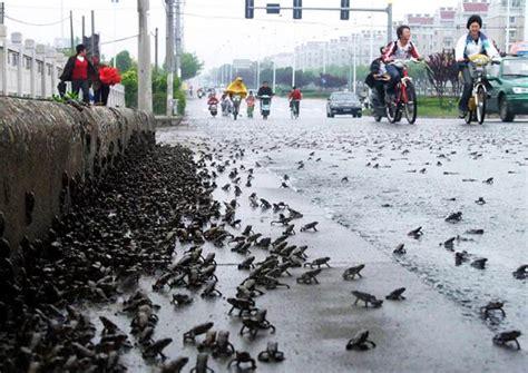 imagenes impactantes en el cielo la lluvia de peces existe 161 si no te lo crees mira