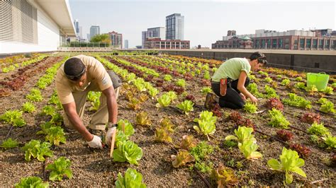 types of community gardens rooftop farming is getting the ground the salt npr
