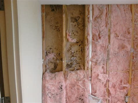 how to get mould off bathroom walls how to get mould off bathroom ceiling black mould chester student lets get rid of