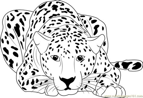 cheetah coloring pages cheetah free colouring pages