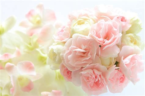 fiori mese di luglio fiori mese di luglio 3234 msyte idee e foto di