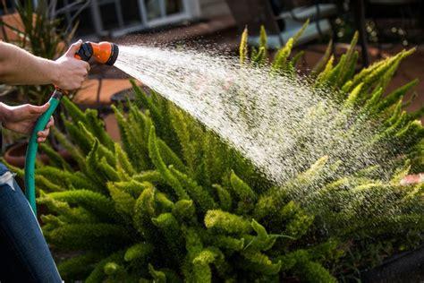 watering deeply