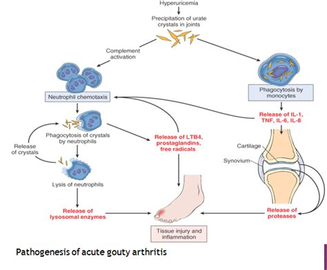 h protein define digestive system of human pathogenesis of acute