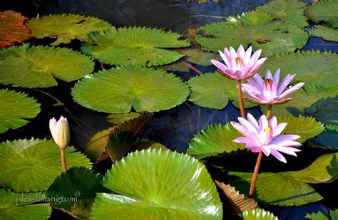 Bunga Tercantik Di Dunia | bunga joy studio design gallery photo