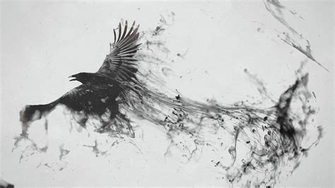 black and white wallpaper b m black and white bird wallpapers 39 wallpapers adorable