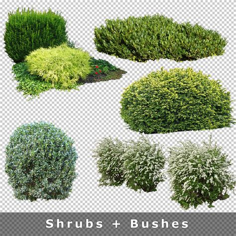 pattern photoshop vegetation cutout plants v03 cutout vegetation for architecture
