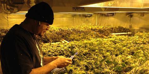 cannabis indoor ohne le gr 252 ner hanfanbau weniger strom mehr wumms taz de