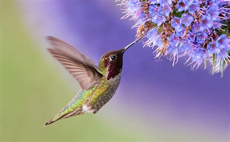 18 facts you never knew about hummingbirds