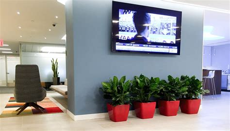 best plant for office how to choose best plants for your office