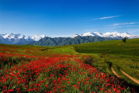 Flower Mountain alaska scenery mountains flowers scenery mountains