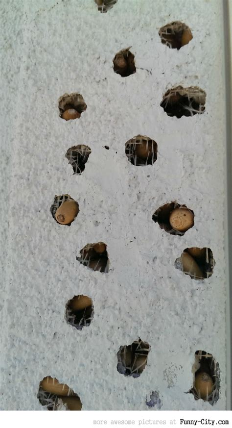 house gets shot house gets shot by a gang of woodpeckers