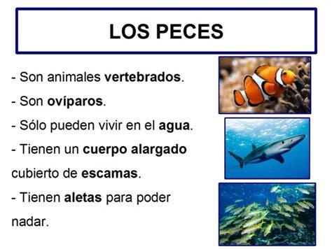 imagenes figurativas con sus caracteristicas caracter 237 sticas de los peces