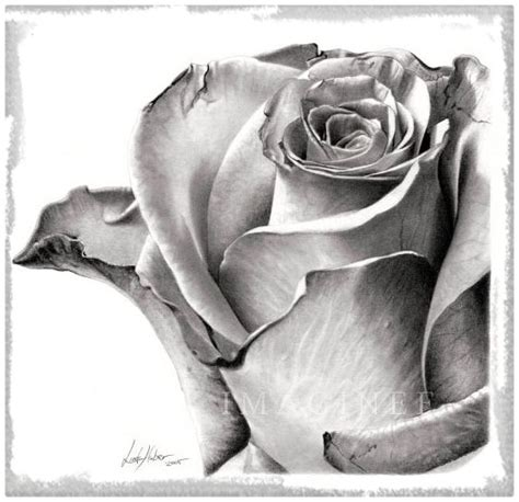 imagenes satanicas a lapiz rosas para dibujar related keywords rosas para dibujar