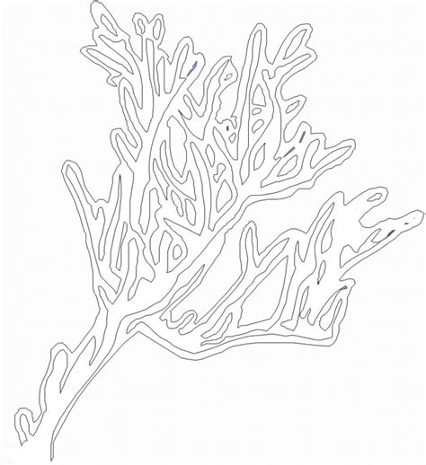 coral clipart coloring page pencil and in color coral