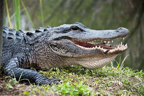 7 Most Poisonous Animals by The 7 Most Dangerous Animals In America Survival