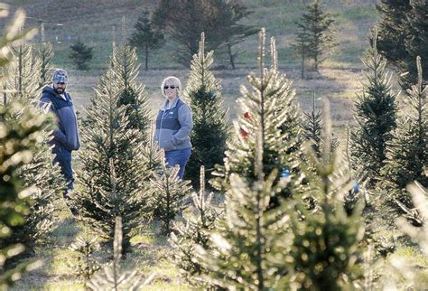 real christmas trees offer environmental benefits local