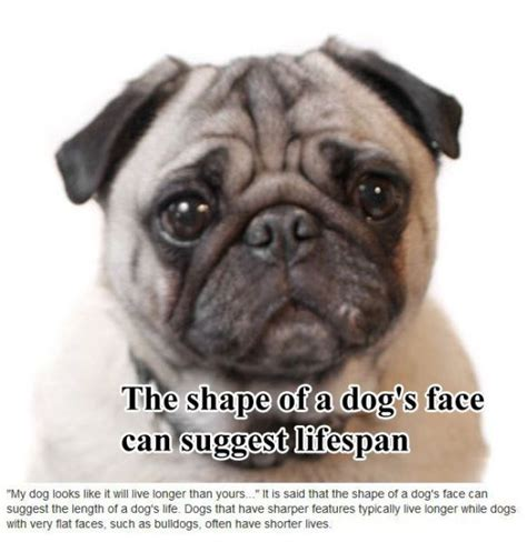 about puppies surprising facts about dogs 10 pics izismile