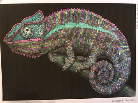 intricate ink animals in 17 best images about tim jeffs on detailed drawings ink and coloring books
