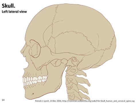 skull diagram skull diagram lateral view axial skeleton visual atlas