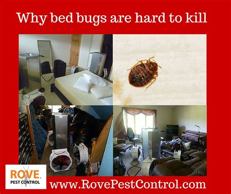 can bed bugs live in electronics why bed bugs are hard to kill rove pest control