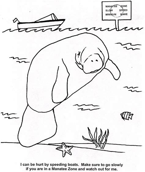 manatee pictures to print az coloring pages
