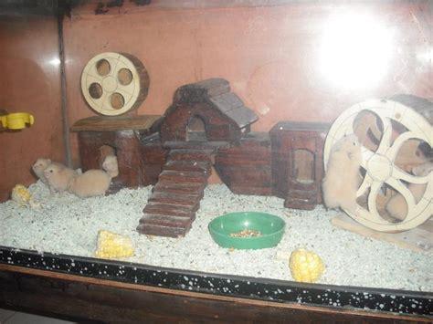 Rumah Kandang Hamster Tempat Mandi Hamster membuat kandang hamster sendiri hamster malang malang hamster jenis hamster kandang