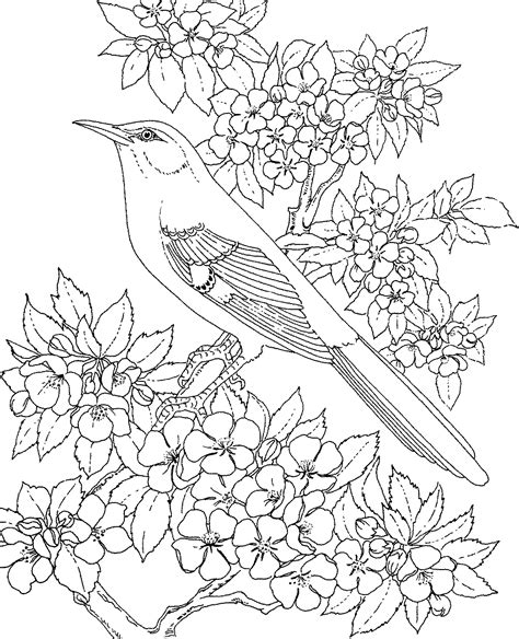printable coloring pages birds and flowers free printable coloring page arkansas state bird and