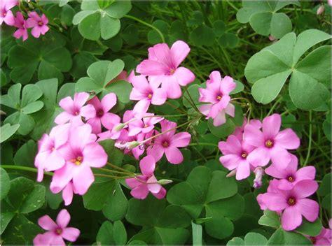 maggio in fiore rumore di fusa maggio in fiore