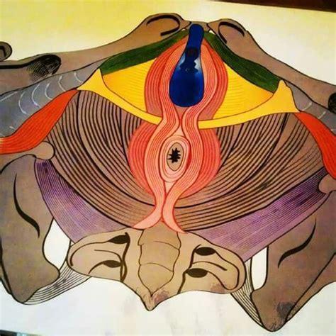 pavimento pelvico gravidanza oltre 25 fantastiche idee su pavimento pelvico su