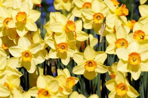 Church For St Davids Day by St David S Day In The United Kingdom