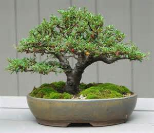 selecting the right bonsai pots is important