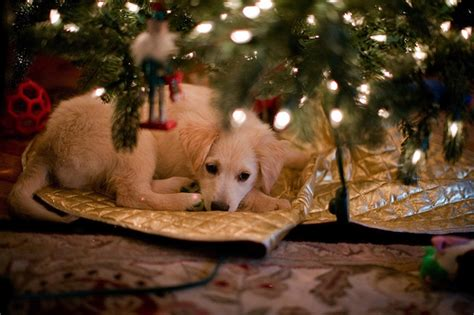 puppies under the tree flickr photo sharing