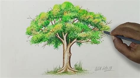 tree to color trees drawing color www pixshark images galleries