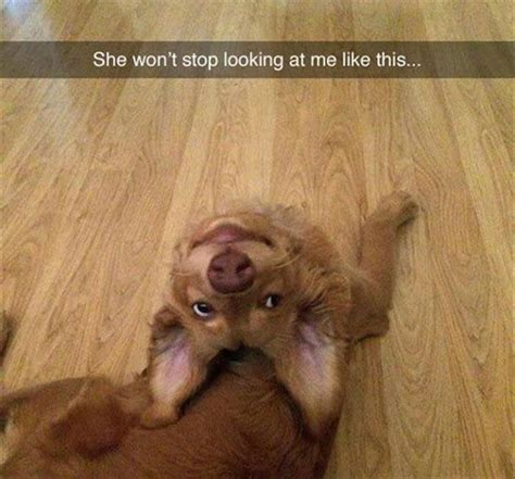 funny  dogs     cute   internet