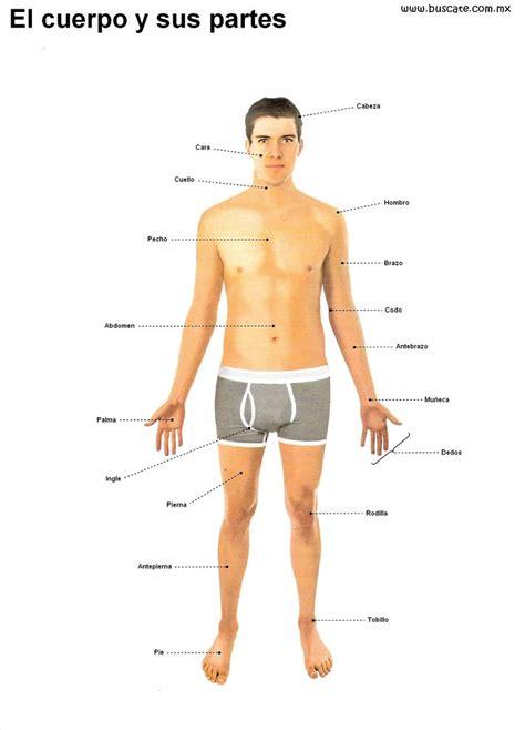 el cuerpo humano 8449438667 esquema del cuerpo humano en colores con el nombre de sus partes anatom 237 a humana human