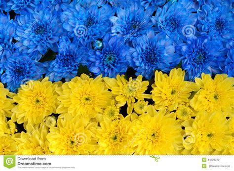 blaue und gelbe kissen blaue und gelbe streifen mit farbigen blumen ukraine