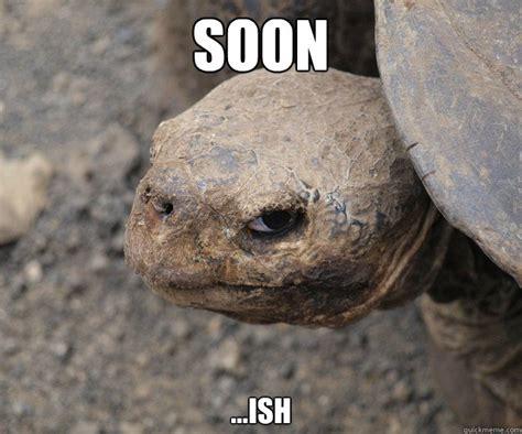 Tortoise Meme - soon ish insanity tortoise quickmeme