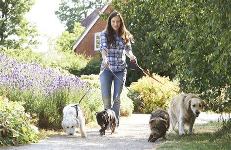 Looks For Your Pet Isnt Walking Season by How To Walk Dogs Without Losing Your Cool