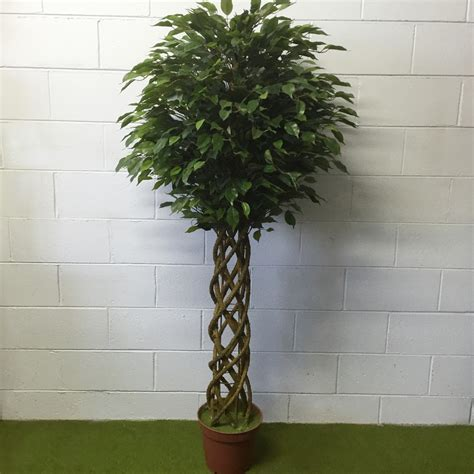 artificial trees melbourne braided ficus tree artificial trees and flowers