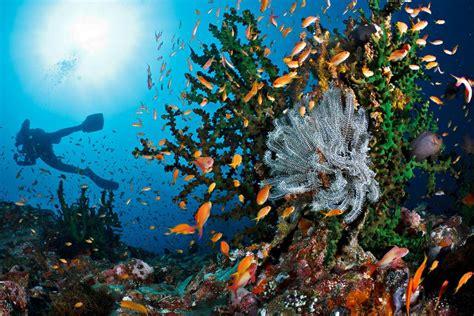 dive di ini dia spot diving dan snorkeling di pulau weh sabang