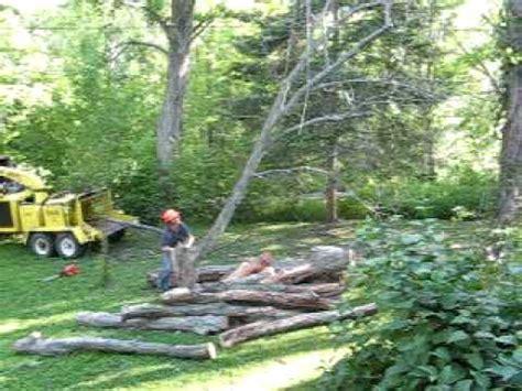 cutting down a big tree near a house youtube