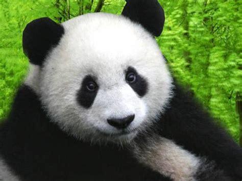 Overall Anak Kecil Panda tak berkategori hizkyamudita
