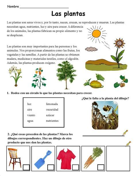 olguchiland las plantas ii las plantas 2 continguts plantes prim 224 ria pinterest