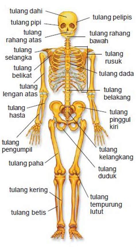 penjelasan lengkap gambar anatomi struktur tubuh manusia night002 powered by night002