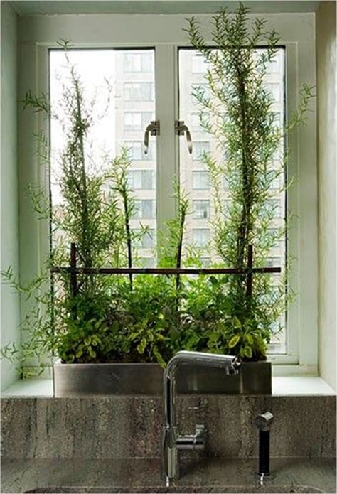 Herbs For Kitchen Window Sill 26 Best Images About Growing Herbs Indoors On