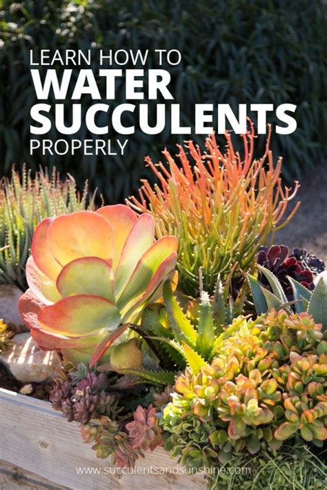 best 25 indoor succulents ideas on pinterest