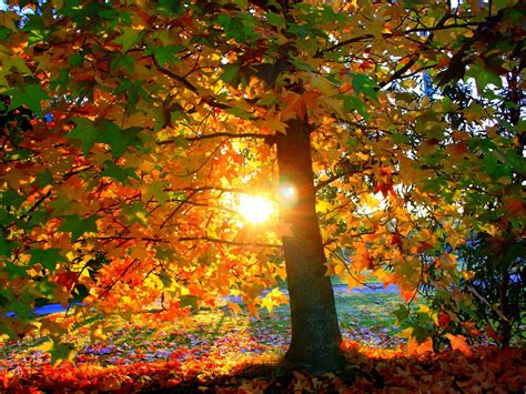 nature landscapes trees forest autumn fall seasons