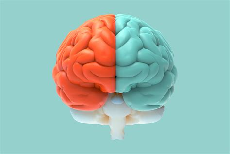 Brain Left Or Right are you a left brain or right brain the answer is